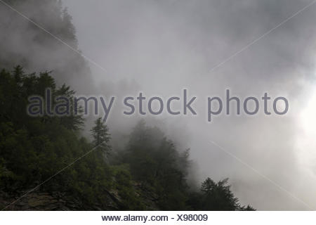 Mountain forest in the midst of clouds - Stock Photo