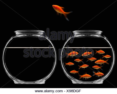 Goldfish jumping out of bowl - Stock Photo