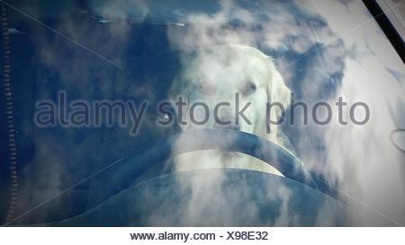 Dog In Car Seen Through Windshield - Stock Photo