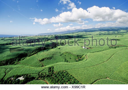 Sugar cane plantations, West coast. Sainte-Marie, Reunion Island - Stock Photo