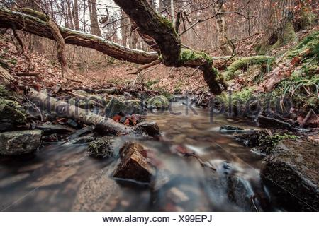 Stream And Fallen Trees In Forest - Stock Photo