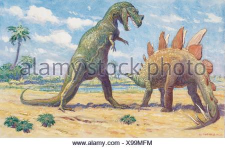 The Stegosaurus has armor to protect it from the Ceratosaurus. - Stock Photo