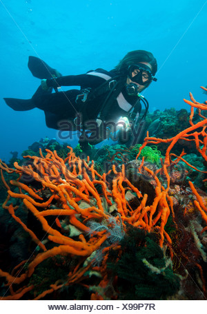 Scuba diver on coral reef. - Stock Photo