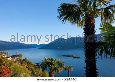 Brissago, islands, isles, canton, TI, Ticino, South Switzerland, lake, lakes, island, isle, Switzerland, Europe, palms, Ronco, - Stock Photo