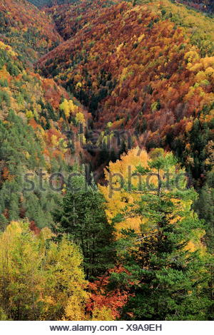 Autumnal forest landscape in Ordesa y Monte Perdido National Park, Huesca, Spain - Stock Photo