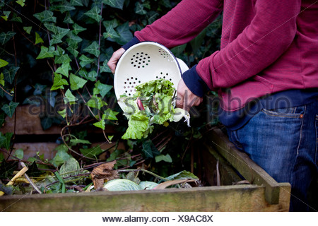 A man emptying vegetable peelings onto a compost heap - Stock Photo