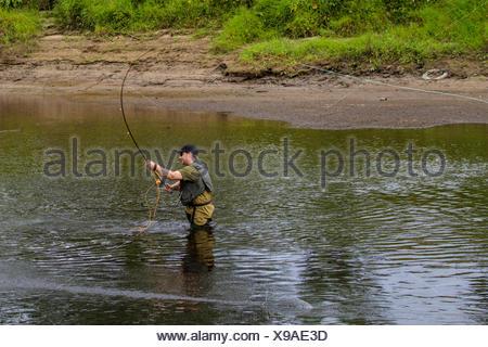 Atlantic salmon, ouananiche, lake Atlantic salmon, landlocked salmon, Sebago salmon (Salmo salar), salmon angler with fishing rod, Ireland, River Moy - Stock Photo