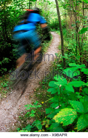 Mountain Biker rides Fisherman's Trail, Lower Seymour Conservation Reserve, Seymour Mountain, North Vancouver, British Columbia, - Stock Photo