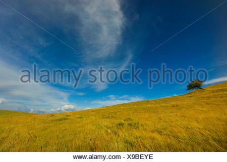 single tree in field landscape, Germany, Mecklenburg-Western Pomerania, Hiddensee - Stock Photo
