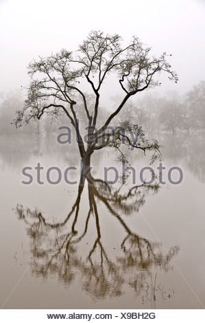 Tree and reflection in water - Stock Photo