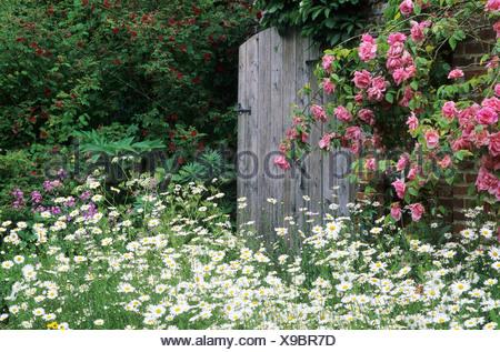 Garden Gate Rustic Wooden Climbing Roses Daisies Elsing Hall Rose Flower  Flowers Garden Gardens Gates