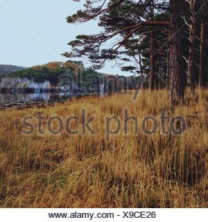 Ireland, Munster, County Kerry, Killarney, Autumn Landscape - Stock Photo