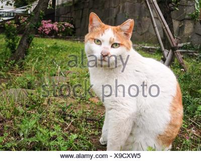 Portrait Of Ginger Cat In Backyard - Stock Photo