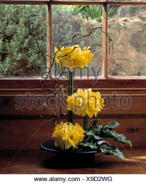 Still-Life of yellow daffodils and green leaves in formal Ikebana-style floral arrangement on windowsill - Stock Photo