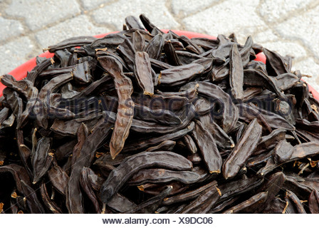 Carob Tree, Locust Tree - Stock Photo