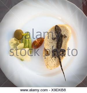 Lizard and bread with vegetable on plate. - Stock Photo