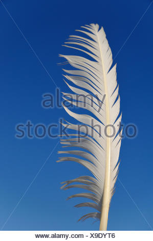 White feather in the wind, against a blue sky - Stock Photo