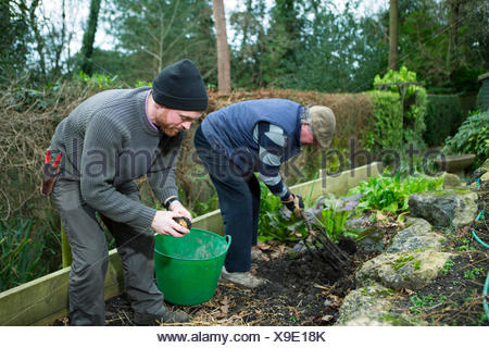Two men working in garden, Bournemouth, County Dorset, UK, Europe - Stock Photo