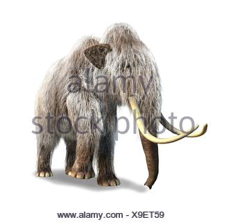Photorealistic 3 D rendering of a Mammoth. On white background with drop shadow and clipping path included. - Stock Photo