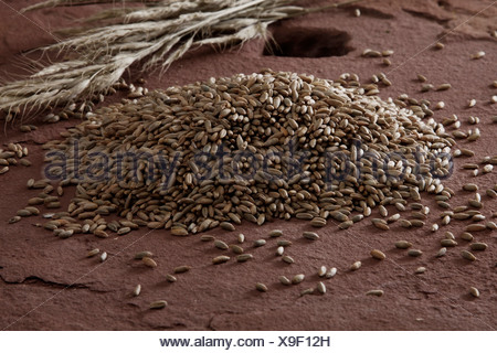 Rye (Secale cereale) on a millstone - Stock Photo
