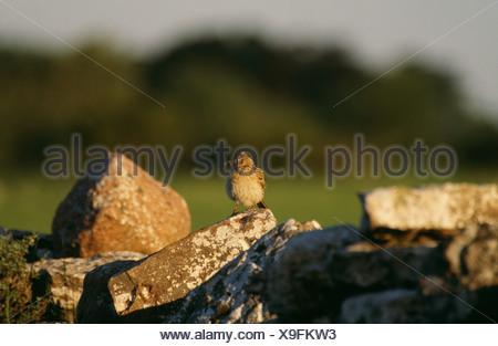 Bird perching on rock - Stock Photo
