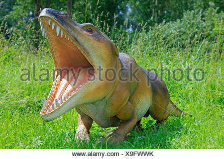Ambulocetus (Ambulocetus natans), primitive extinct species of wales - Stock Photo