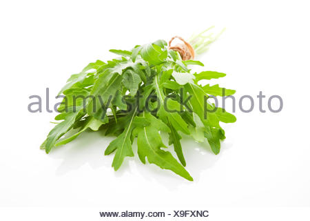 herb, food, aliment, isolated, leaves, boil, cooks, boiling, cooking, - Stock Photo
