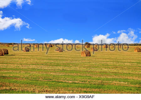 Hay, field and blu sky - Stock Photo