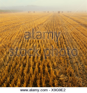 Hay bales on field - Stock Photo
