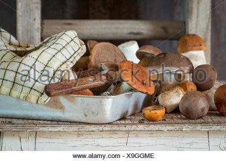 Edible forest mushrooms (Birch bolete - Leccinum scabrum and aspen mushroom - Boletus edulis ) in aluminum tray with checkered k - Stock Photo
