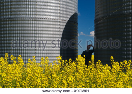 a man looks out over a field of bloom stage canola with grain bins(silos) in the background, Tiger Hills, Manitoba, Canada - Stock Photo