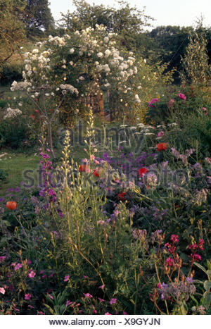 BLue larkspur and borage with pink geraniums in border in large country garden with white climbing roses on an arch - Stock Photo