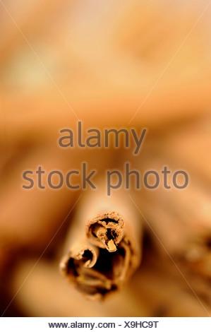 Cinnamon spice sticks - Stock Photo