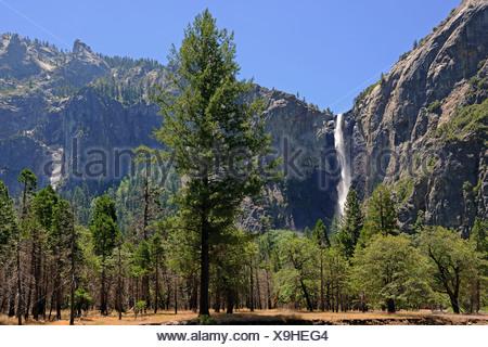 Bridalveil Falls, a waterfall in Yosemite National Park, California, USA, North America - Stock Photo