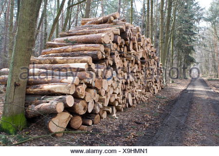 Large pile of logs, tree trunks cut into lengths after storm damage, Hesse, Germany - Stock Photo