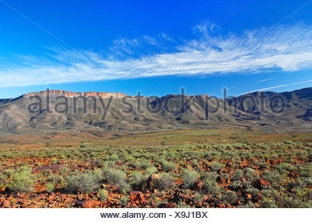 Karoo National Park, high plain in front of Nuweveld Mountains, South Africa, Western Cape, Karoo National Park - Stock Photo
