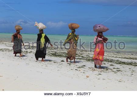 women carrying sacks with seaweeds on their heads, Tanzania, Sansibar - Stock Photo