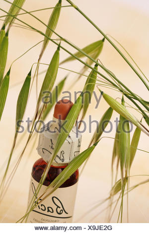 Wild oat. Bach´s floral remedy - Stock Photo