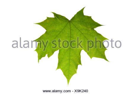 cut sheet - Stock Photo