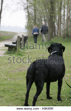 Couple walking away abandon dog  in park - Stock Photo