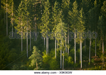 Conifer forest near Sigmaringen, Baden-Wuerttemberg, Germany, aerial photo - Stock Photo