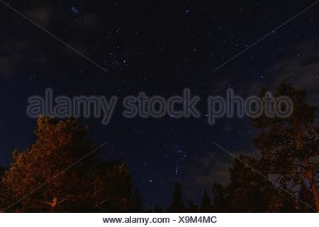 Low Angle View Of Trees Against Star Field At Night - Stock Photo