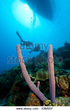 Scuba divers on a sloping wall - Stock Photo