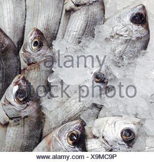 Dorada Fish At A Market In Spain - Stock Photo