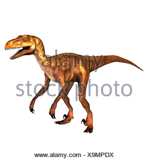 The Deinonychus occurred also terrible claw geannt in the lower Cretaceous period. The second foot toe approx. 13 cm long and - Stock Photo