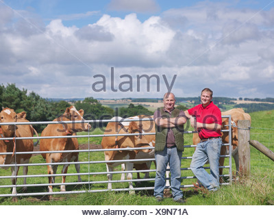 Farmer and son with Guernsey cows - Stock Photo