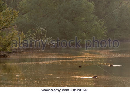 Ochtendsfeer in de Boomgat in Nationaal Park de Biesbosch; early morning in Biesbosch National Park - Stock Photo