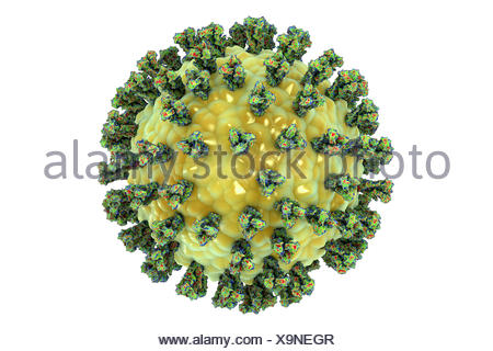 Human parainfluenza virus (HPIV), computer illustration. HPIV is a paramyxovirus that causes different types of respiratory infections, including ear infections, sore throats, croup, pneumonia and bronchitis. It is most common in children and babies. - Stock Photo