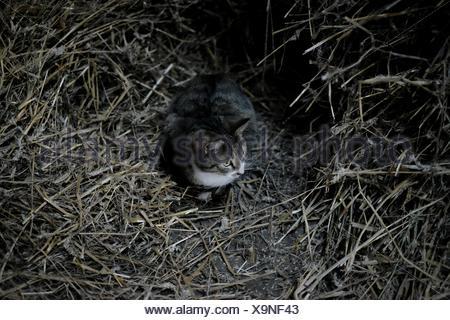 Cat On Hay - Stock Photo