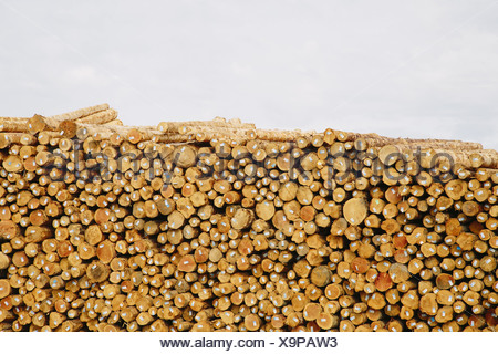 Port Angeles Calallum County Washington USA Stacks of freshly cut logs - Stock Photo